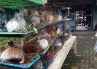 Tempat koleksi lengkap satwa di Jogja